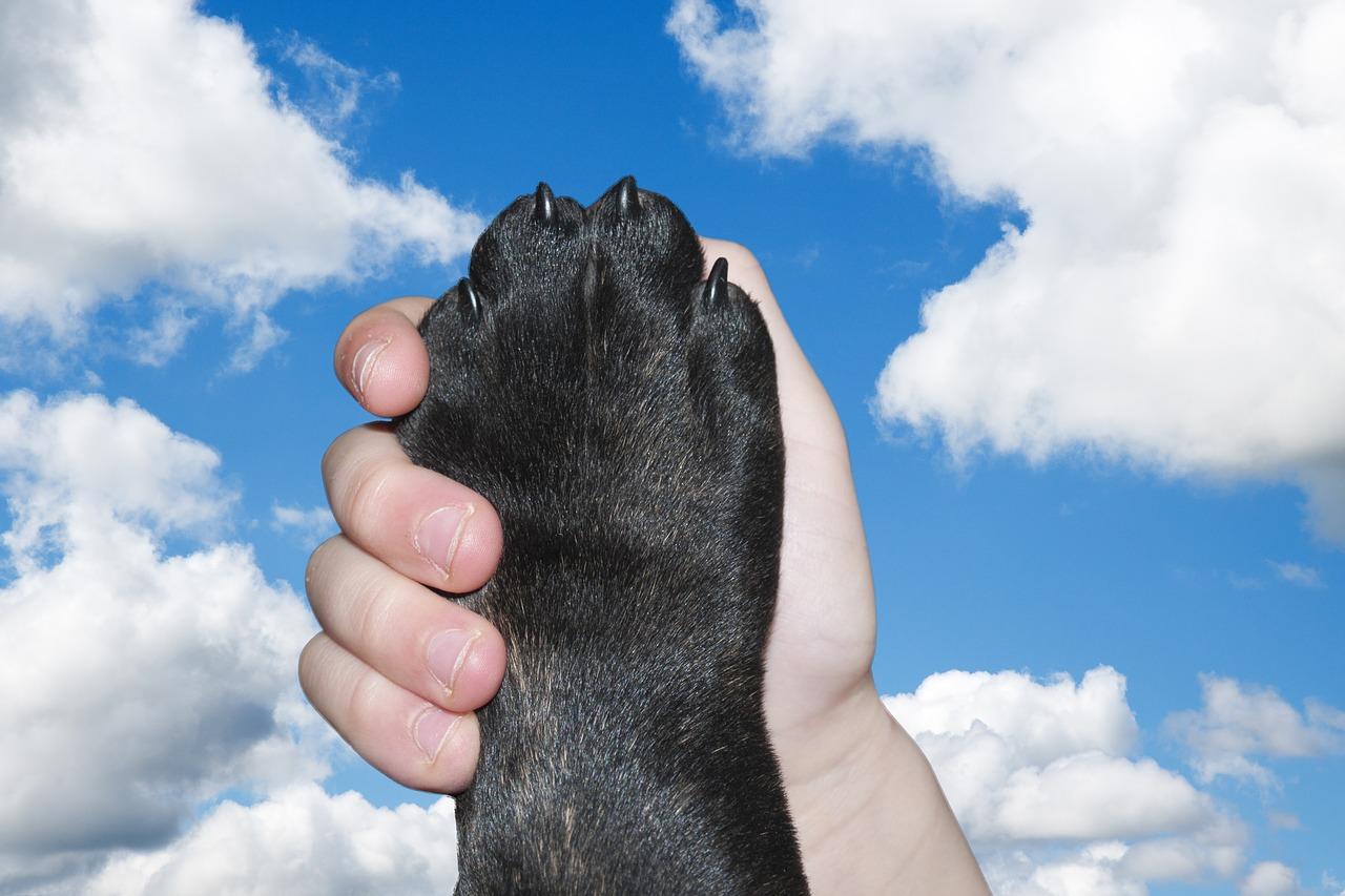 dog, paw, hand